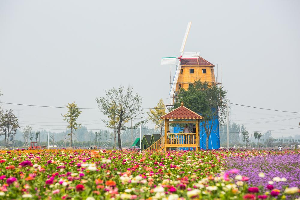 鄢陵果树盆景采摘园