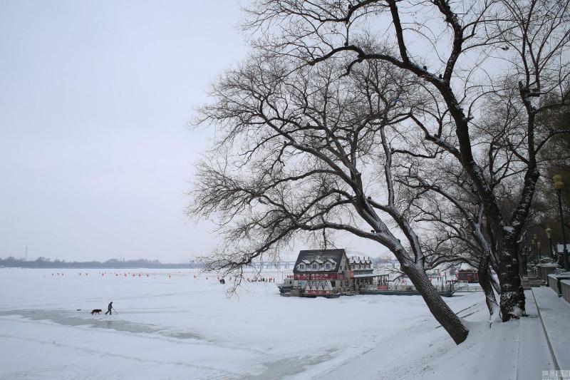 哈尔滨松花江被皑皑白雪覆盖 美如素描