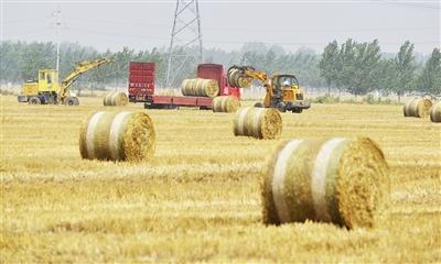 强力推进农业转型升级,加快建设现代农业强市