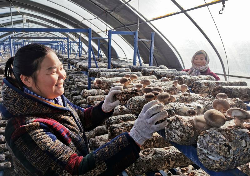 成立农业发展服务中心,带动贫困群众实现脱贫致富