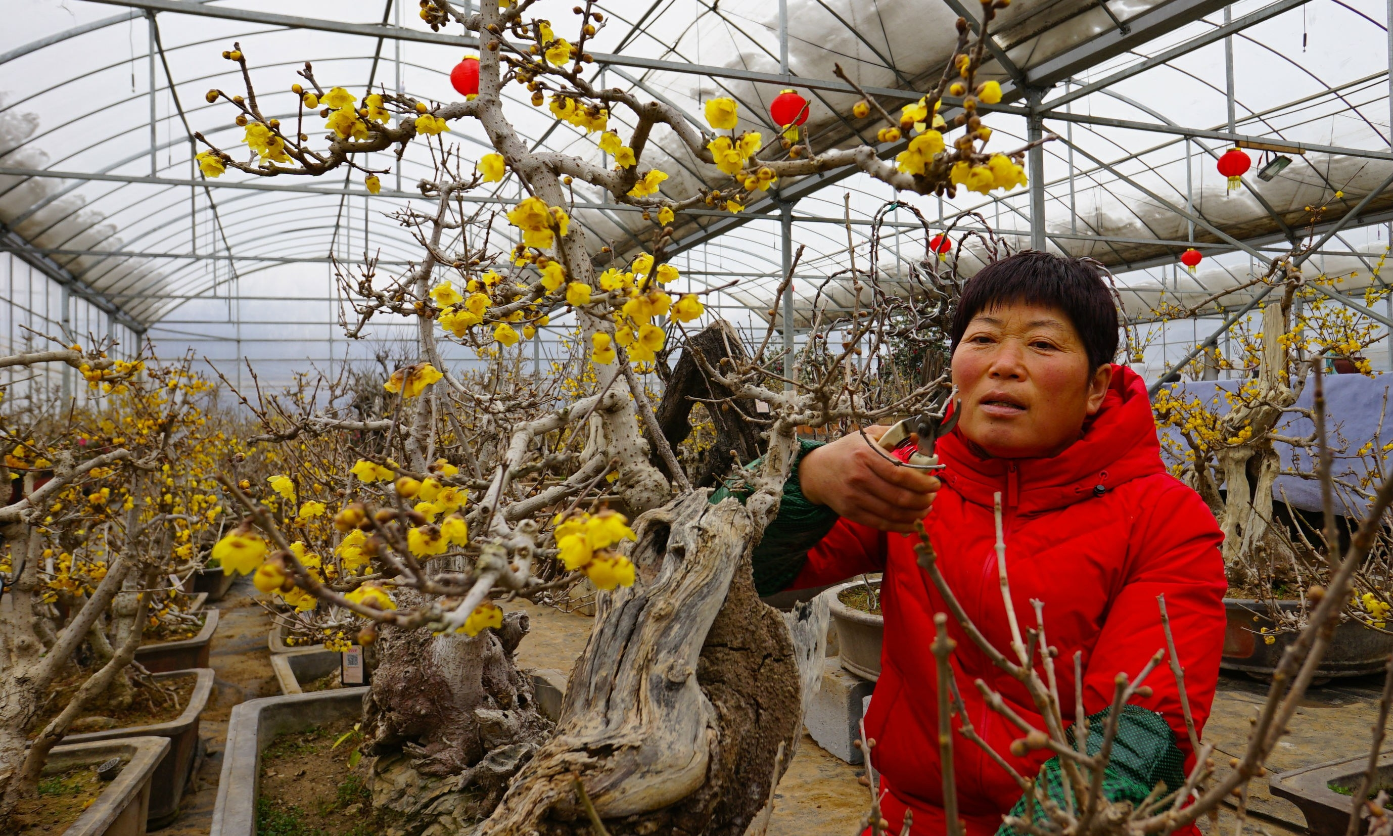 鄢陵县发展特色花卉种植产业,助力农民增收
