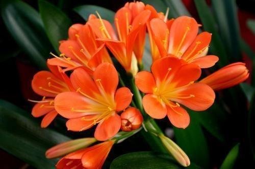 春天适合种什么花