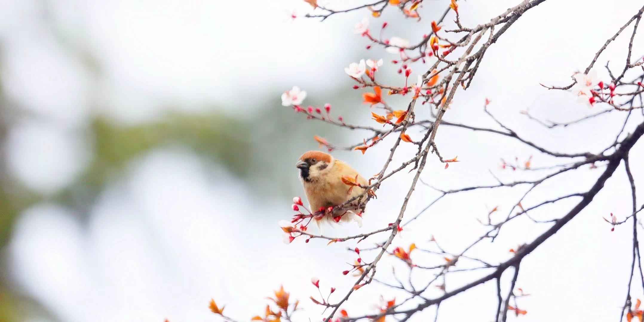 远眺的小鸟